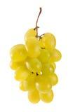Ponga verde las uvas de vino Foto de archivo