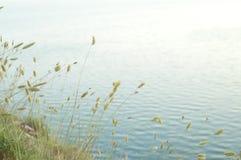 Ponga verde los conos en un backgroud azul del mar imagen de archivo libre de regalías