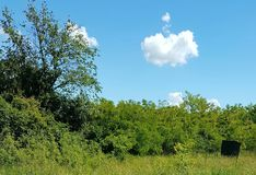 ponga verde más oxígeno Foto de archivo