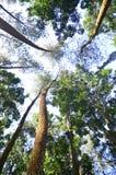 Ponga verde mi bosque Foto de archivo libre de regalías