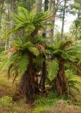 Ponga at Waimangu volcanic valley Stock Image
