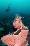 Éponge sur le récif Image libre de droits