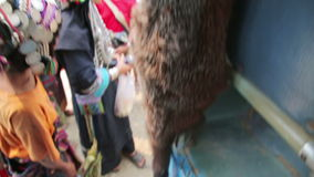 PONGSALI, LAOS - APRIL 2014: bus trip with death animal stock footage