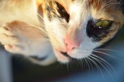 Poniższy ciemnego oka kot fotografia stock