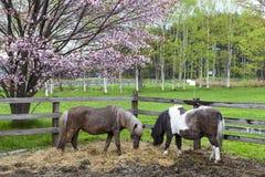 Poni horse