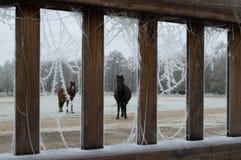 Ponies Through the Barm Door Royalty Free Stock Image