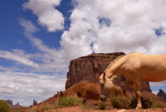 Ponies, Navajo Tribal Park Stock Images