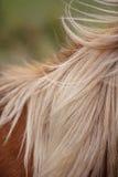 Ponies in Padock Royalty Free Stock Image