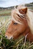 Ponies in Padock Stock Images