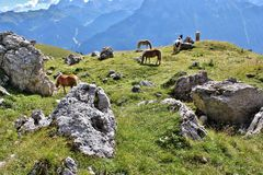 Ponies by the Rosengarten Group, Dolomites. Trail along the bottom of the Rosengarten Group, Dolomites Royalty Free Stock Photography