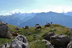 Ponies by the Rosengarten Group, Dolomites. Trail along the bottom of the Rosengarten Group, Dolomites Stock Images