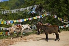 Ponies, Takthsang Goemba, Bhutan Stock Image
