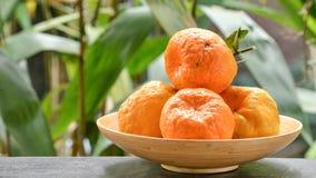 Ponkan Mandarin Stock Images