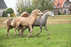 Ponnies Welsh в осени Стоковое Изображение RF