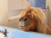 ponny Royaltyfri Fotografi