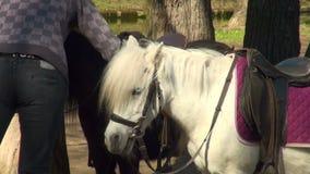 ponny arkivfilmer