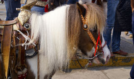 ponny Arkivbild