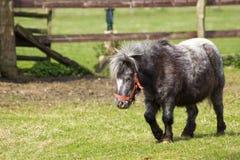 Ponny i den dalta zoo Fotografering för Bildbyråer