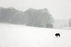 Ponny i snön Arkivbilder