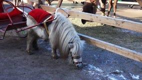 Ponny med den fästa vagnen på zoo arkivfilmer