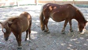 Ponny med gröngölingen arkivfilmer