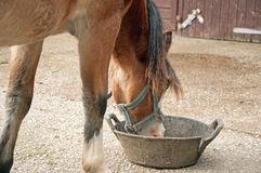 Ponny som äter från ett överhopp Arkivfoto