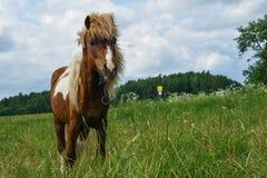 Ponny som betar i friluftsdag Royaltyfri Bild