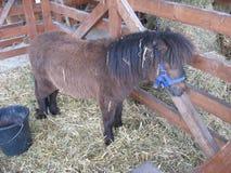 Ponny, Weinig paard, Landbouwbedrijfdier, Schuw paard royalty-vrije stock fotografie