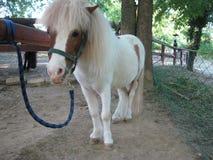 Ponny, Weinig paard, Landbouwbedrijfdieren, Zonnige dag, de Lentetijd stock afbeeldingen