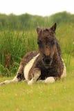Ponnydusch Royaltyfri Foto