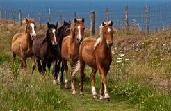 Ponnyer för St Davids Royaltyfria Bilder