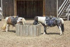 ponnyer två Arkivfoto