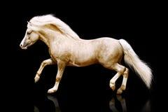 ponnyhingst Arkivbild