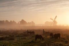 Ponnyn betar på och väderkvarnen i tät soluppgångdimma Arkivbilder