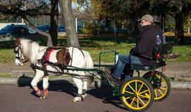 Ponnyn på den Paris hästen ståtar Royaltyfria Foton