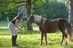 ponnyshetland kvinna Arkivbild