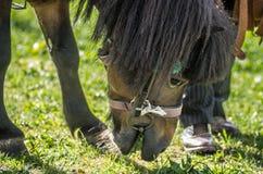 Ponnystående Royaltyfria Foton