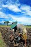 Ponorogo. INDONESIA - APRIL 13, 2014: Farmers are planting corn on his farm Gontor Village, , East Java, Indonesia. Photo taken on: April 13st, 2014 Royalty Free Stock Image