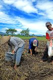 Ponorogo. INDONESIA - APRIL 13, 2014: Farmers are planting corn on his farm Gontor Village, , East Java, Indonesia. Photo taken on: April 13st, 2014 royalty free stock photo