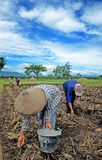 Ponorogo. INDONESIA - APRIL 13, 2014: Farmers are planting corn on his farm Gontor Village, , East Java, Indonesia. Photo taken on: April 13st, 2014 Stock Photography