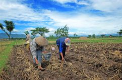 Ponorogo. INDONESIA - APRIL 13, 2014: Farmers are planting corn on his farm Gontor Village, , East Java, Indonesia. Photo taken on: April 13st, 2014 Stock Photos