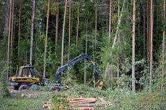 Ponsse Forest Harvester Felling uma grande árvore Spruce Fotos de Stock Royalty Free