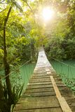 Pont épique au-dessus de rivière de jungle Photographie stock libre de droits