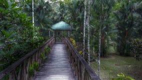 Pont étonnant dans la forêt Photos libres de droits