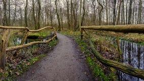 Pont au-dessus d'un marais dans une forêt Image stock