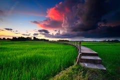 Pont au-dessus du champ de maïs Photo stock