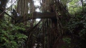 Pont avec des chiffres des dragons chez le singe Forest Bali Indonesia d'Ubud de jungle banque de vidéos