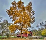 Pont couvert du Maryland en automne Photos stock
