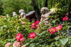 Pont décoré des sculptures des lions et des roses de floraison dans le Cité interdite ou le Gugong, Pékin, Chine Images stock