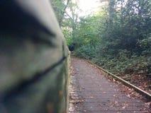 Pont dans Forrest Image stock